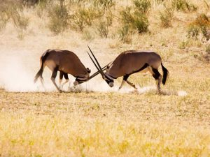 What to do | Kgalagadi Transfrontier Park