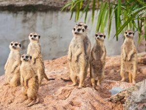 What to do   Kgalagadi Transfrontier Park